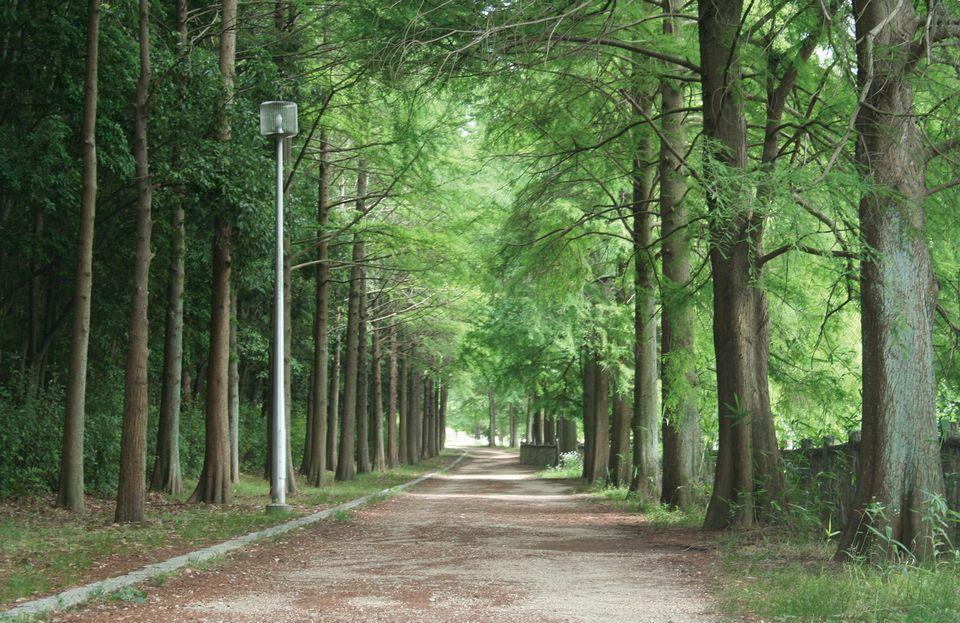 Komyoike Park