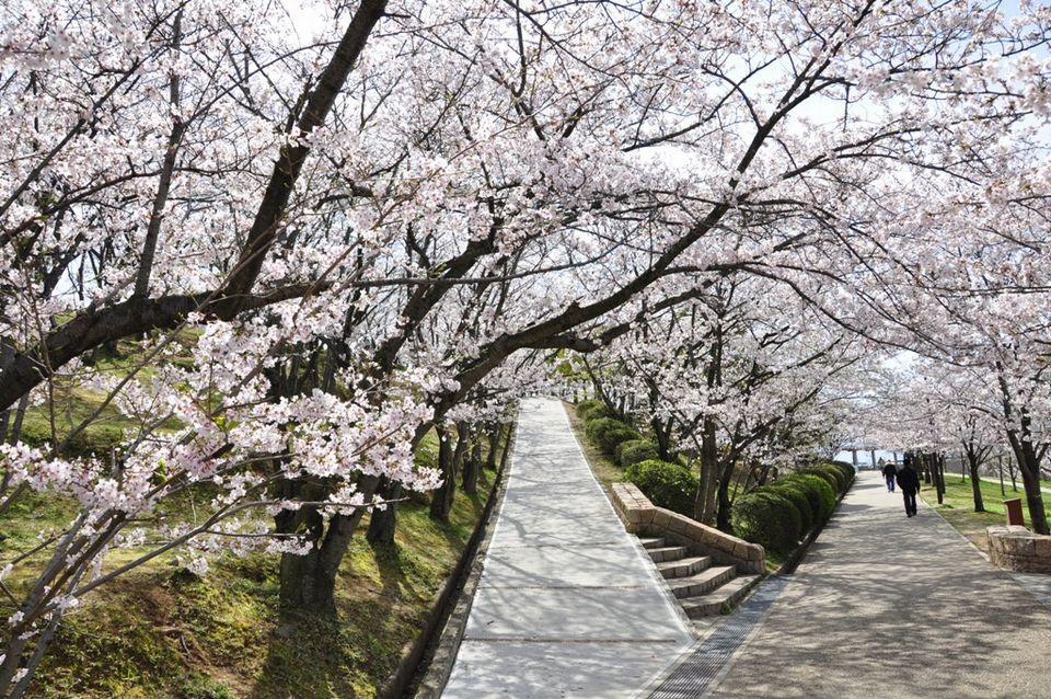 구로도리야마산공원