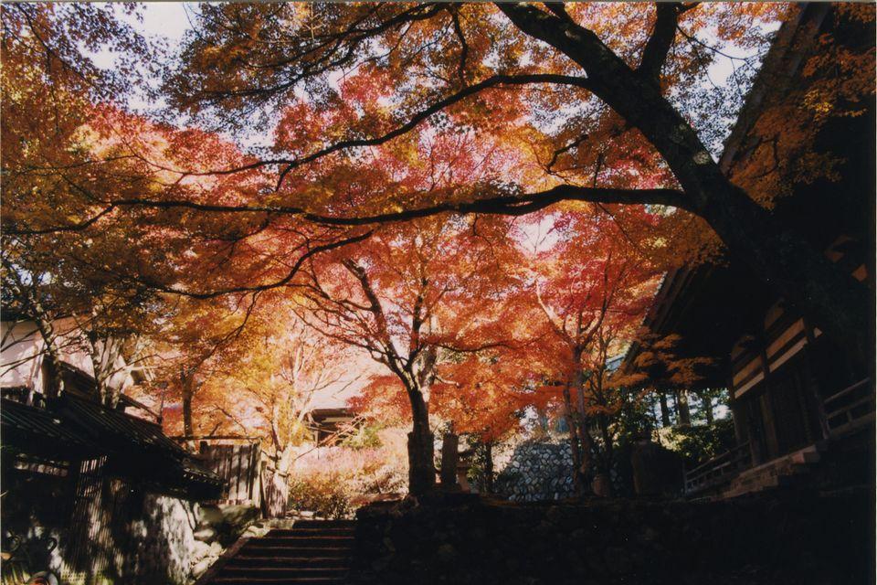 마키오산 세후쿠지절