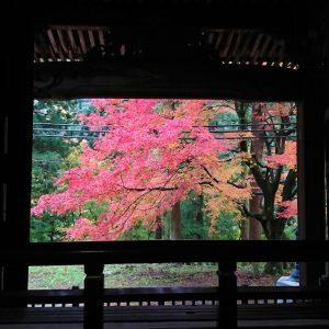 20201118施福寺の紅葉 (1)トリミング