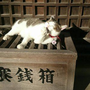 福ちゃん賽銭箱