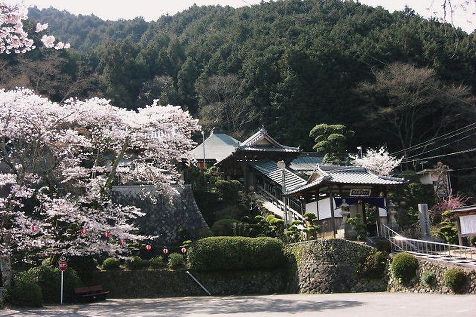 阿弥陀寺の桜②