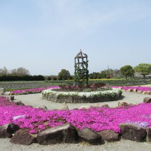 2021年3月31日取得リサイクル公園の花 (5)