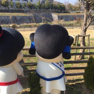 松尾川河川敷公園(ひつじ公園)にはかわいい羊さんがいてるんだよ!