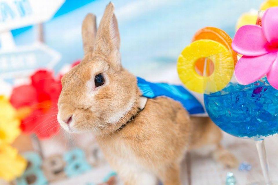 Rabbit-Ruru