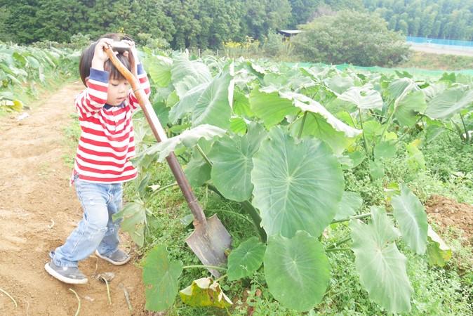 いずみふれあい農の里で年中楽しめる収穫体験をレポ!