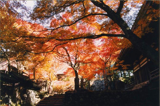 槇尾山 施福寺2